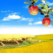 秋收自然风景图片