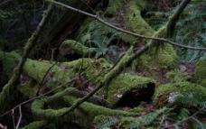 古老的森林图片