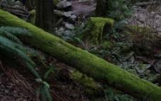 温哥华的森林图片