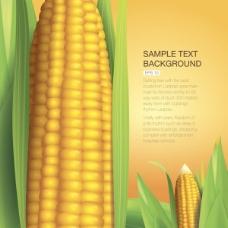金黄玉米矢量素材
