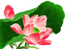 莲花(通道分层)图片