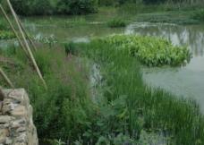水生植物配置效果照片图片