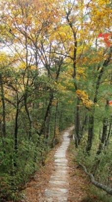 重庆南山图片,古道 春天 春色 绿色 石板路 黄桷古道