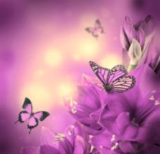 紫色鲜花图片