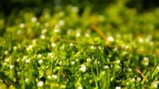 养眼绿色图图片