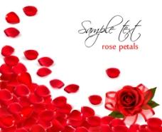 玫瑰花瓣图片