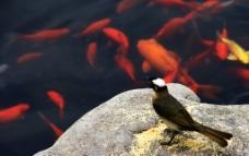 鸟 鱼图片