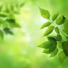 绿叶背景02—高清图片