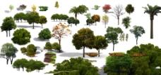 室外树木装饰图片