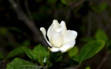 枝枝花图片