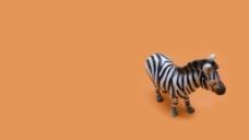 问路的斑马 高清 2D 背景图片