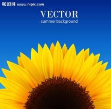 向日葵太陽花鮮花圖片