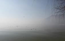 云南滇池海鸥图片