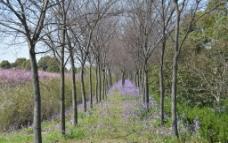 春天的氣息圖片