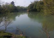 西溪湿地 湖泊 河流图片