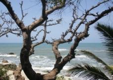 三沙自然的杰作圖片