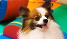 可爱狗图片