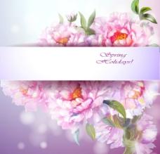 牡丹花背景图片