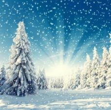 雪花飘舞图片