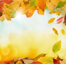 秋天落叶唯美图片