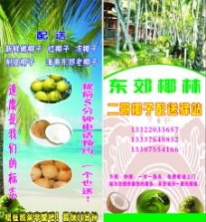 海南椰子图片