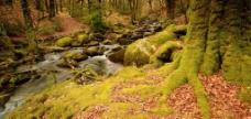 森林河流图片