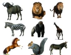野生动物分层素材图片