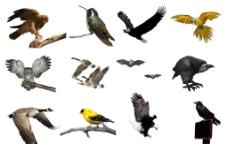 禽鸟分层素材图片