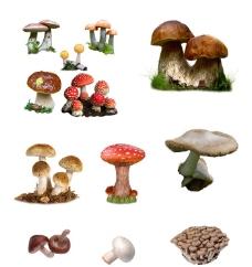 蘑菇分层素材图片