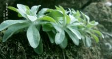 瀑布 植物 生命图片
