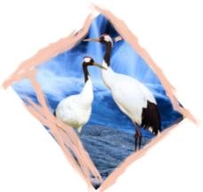 丹顶鹤边框图片