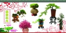 花卉海报图片