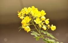 热带花卉图片