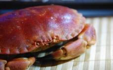 高清面包蟹图片