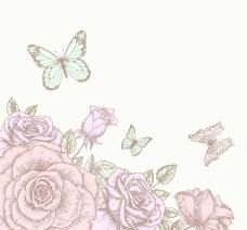 玫瑰蝴蝶图片