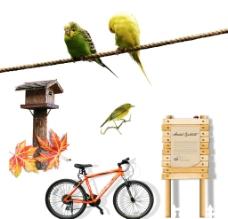 自行车 鹦鹉图片