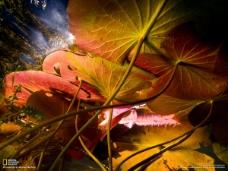 精美树叶背景高清图片